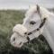 Kentucky Imiteret Lædergrime m/aftagelig Fur Brun/Natur